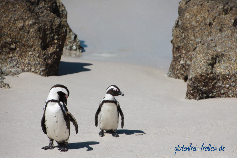 Pinguine am Boulders Beach Südafrika