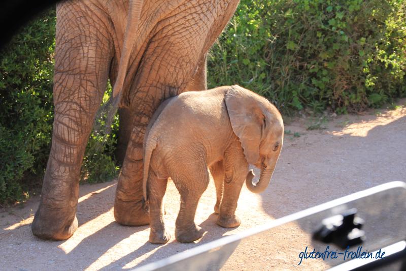 Elefanten im Addo Elephant Park Südafrika