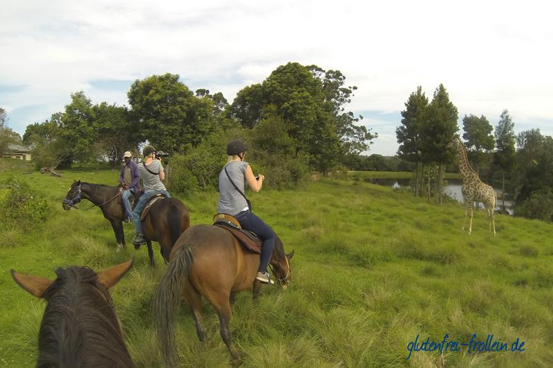 Plettenberg Bay Game Reserve Safari zu Pferd